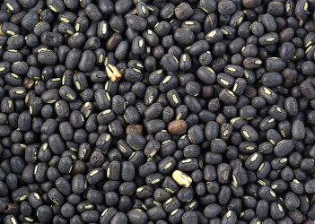 Whole Black gram - Black Lentils - Urad bean with skin