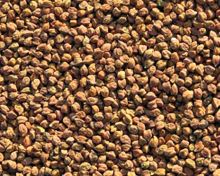 Brown chana - chickpeas
