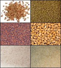 List of grains and flours, list of flours, Glossary of