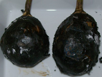 roasted eggplant - baingan