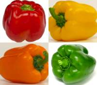 Bell pepper red green yellow orange - capsicum