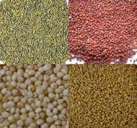 types of millet